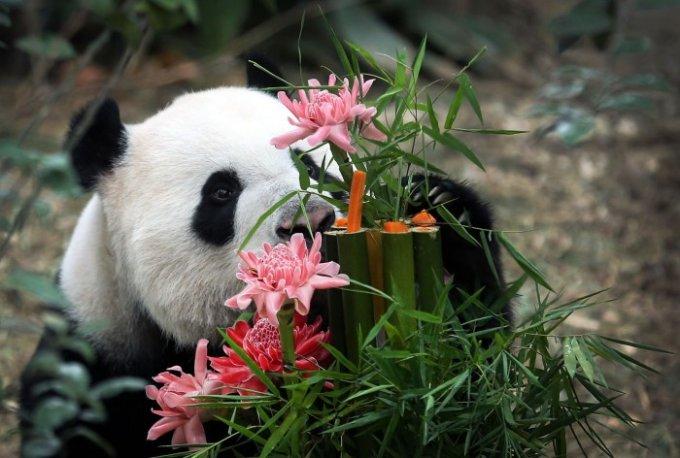 Уровень нежности зашкаливает: животные в единении с природой. Фото