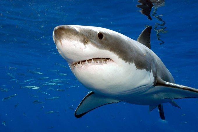 В Австралии рыбак напугал акулу шваброй. Видео