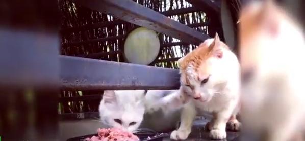 Жадный кот стал новым героем Сети