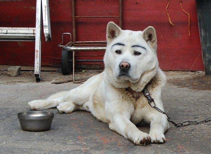 Фотоприколы с животными из серии «мой хозяин — идиот»