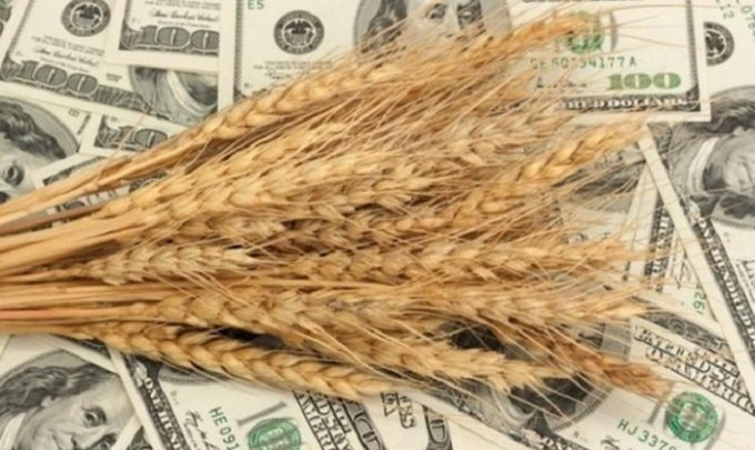 4,6 миллиарда долларов: украинские аграрии впечатлили цифрами экспорта