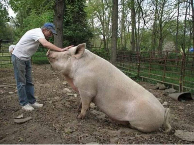 Опасные животные, которые могут убить своего хозяина. Фото