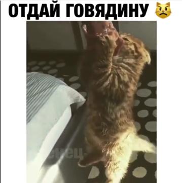 Жадный котенок стал новым любимцем Сети