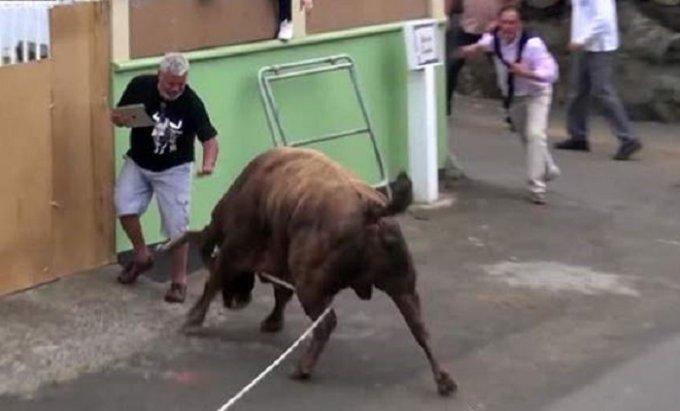 Впечатляющие кадры нападения огромного быка на «зеваку». Видео