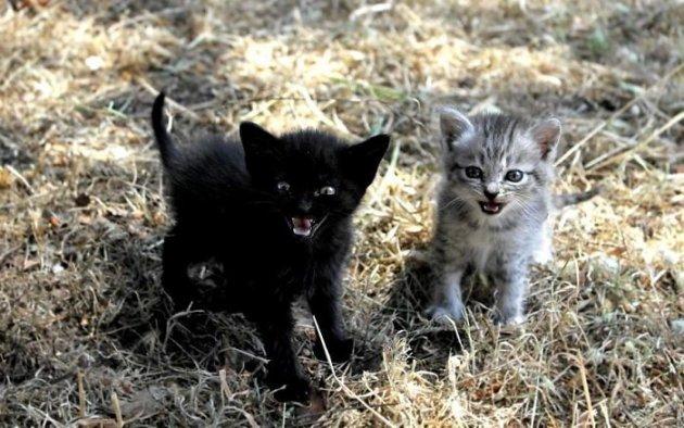 Зловещие и серьезные: котята, которых лучше не беспокоить
