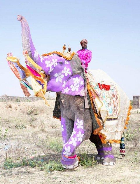 Невероятное зрелище: фестиваль раскрашенных слонов в ярких снимках. Фото
