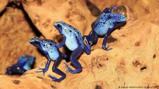 Яркие представители фауны в невероятных снимках. Фото