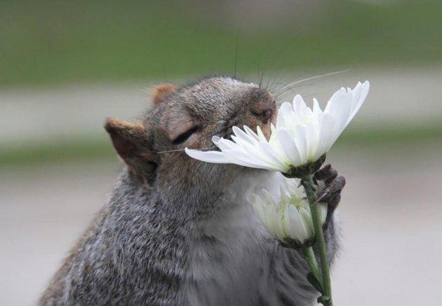Настоящие эстеты: животным тоже нравятся цветы.Фото