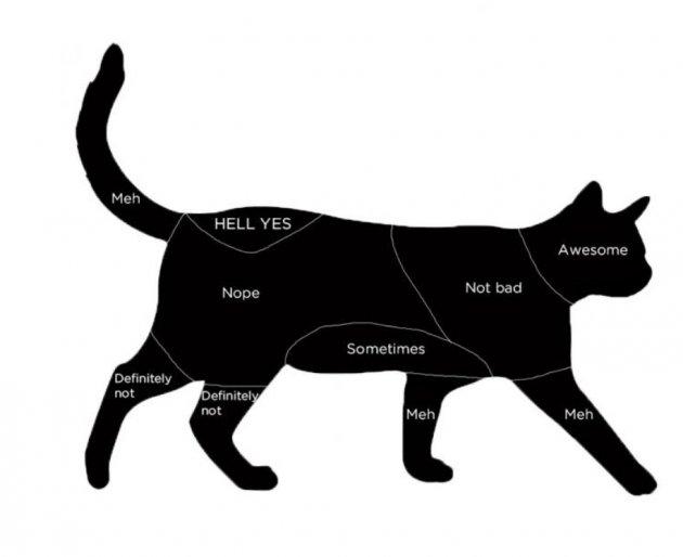Прикол дня: соцсети развеселили уморительными схемами чесания котов и собак