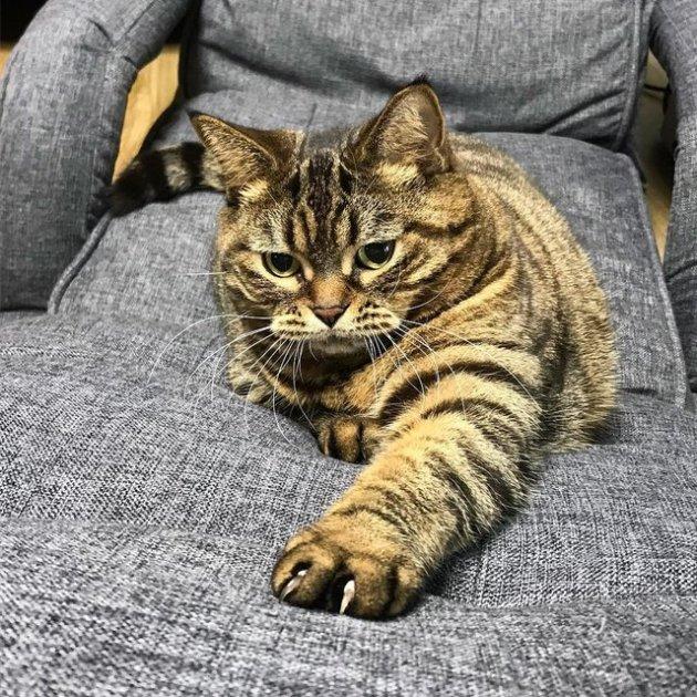 Толстый кот, набросившийся на резиновую рыбку, «взорвал» Сеть. Видео