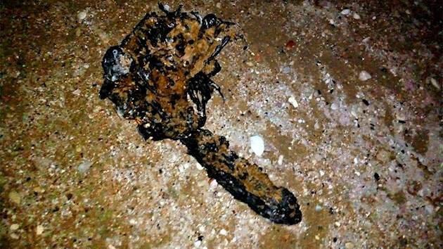 «Веник в мазуте»: Сеть развеселила находка на крымском пляже