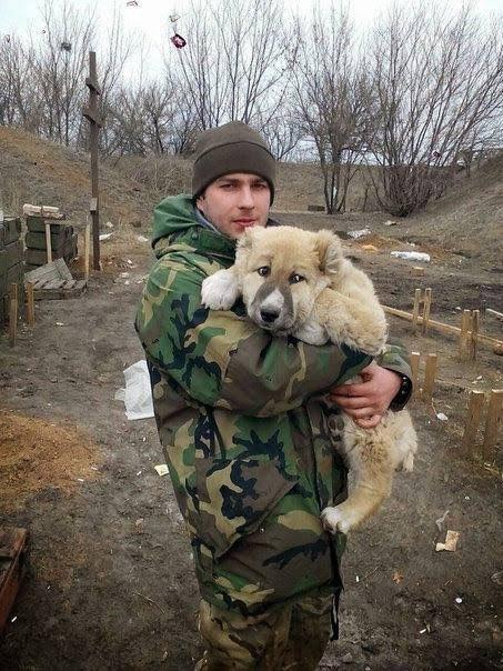 Патриотизм и милота: Сеть покорили пушистые помощники бойцов ВСУ. Фото