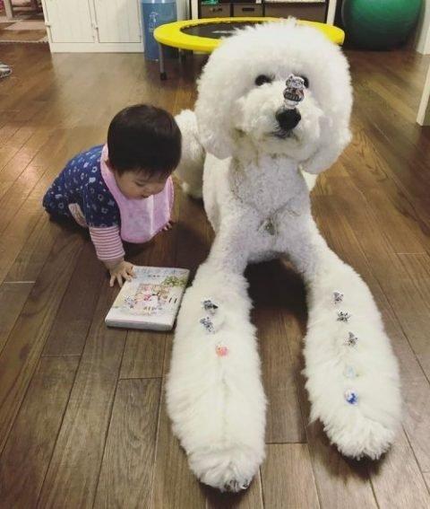 Трогательная дружба годовалой девочки и большой собаки. Фото