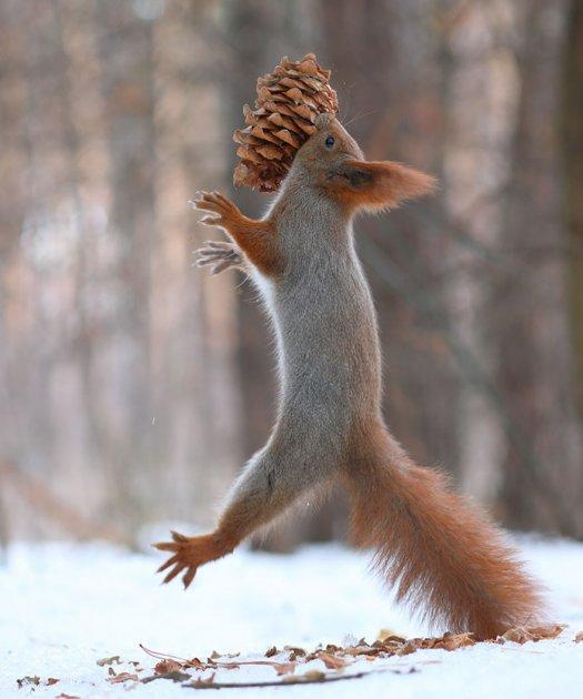 Эти забавные животные: фотографу удалось снять «войну» белок