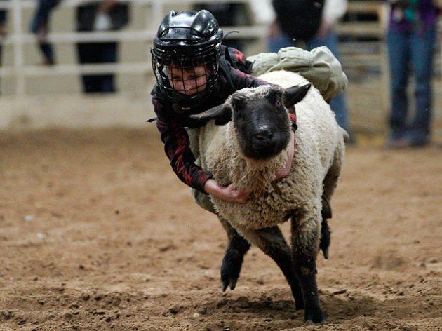Необычное родео Mutton Bustin: дети, пытающиеся обуздать овец. Фото