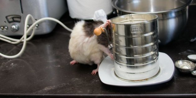 Это – милый и дружелюбный мышонок-повар Фиббс. Фото