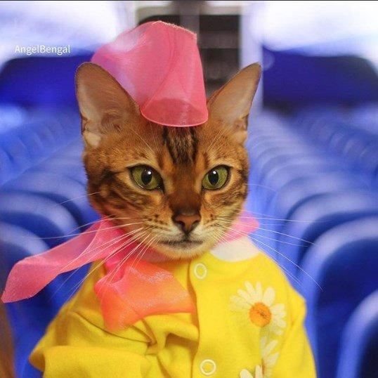 Бенгальская кошка развеселила Instagram оригинальными фотками