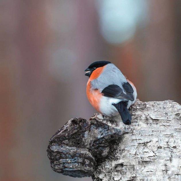 Забавные птички в работах талантливого мастера. Фото