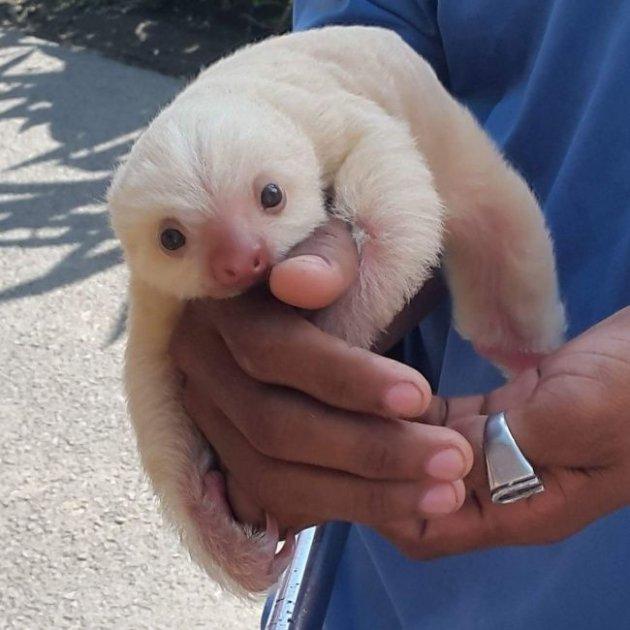 Мимишность зашкаливает: милые детеныши разных животных. Фото