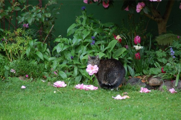 Жительнице Канады кошка дарит цветы