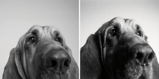Как стареют собаки. Интересный и необычный фотопроект