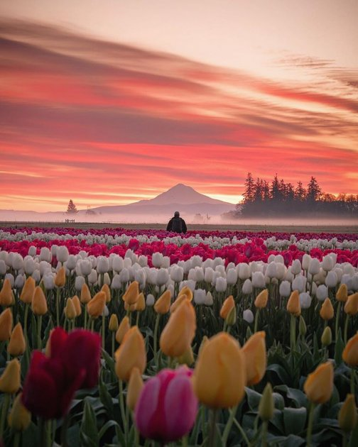 Как приходит весна в разные страны. Фото