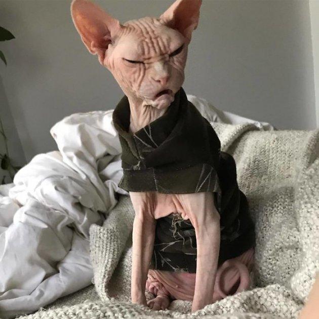В Сети показали очередного самого злого кота