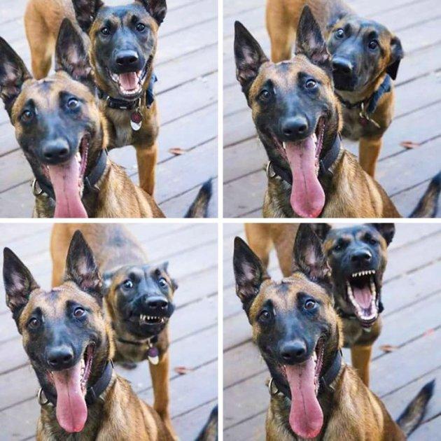 Животные случайно сделали эти снимки шедеврами. Фото