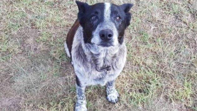 В Австралии пес спас сбежавшую из дома 3-летнюю девочку