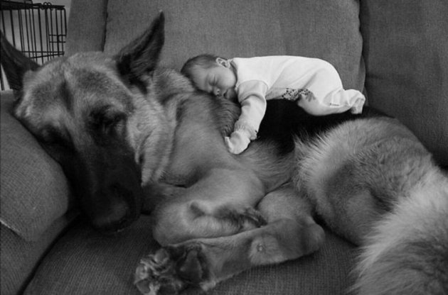 Каждый ребенок нуждается в собаке: милые картинки для поднятия настроения