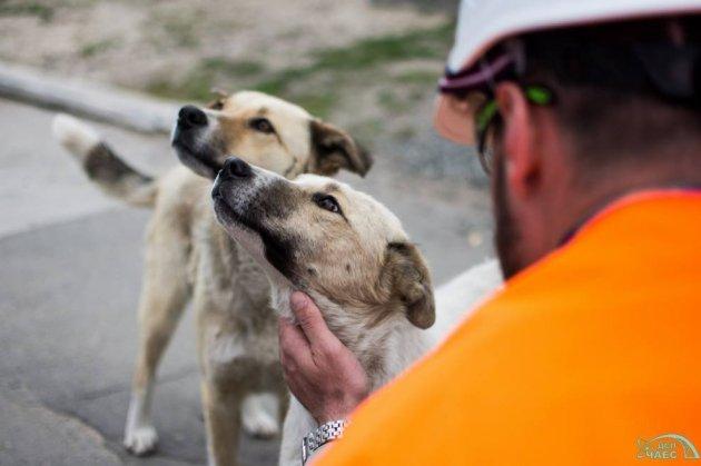 Бездомные щенки из зоны отчуждения уедут на ПМЖ в Штаты