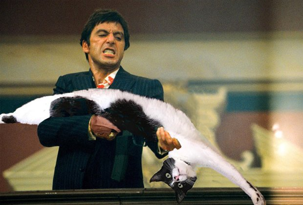 Сеть взорвали фотожабы с котом-гимнастом