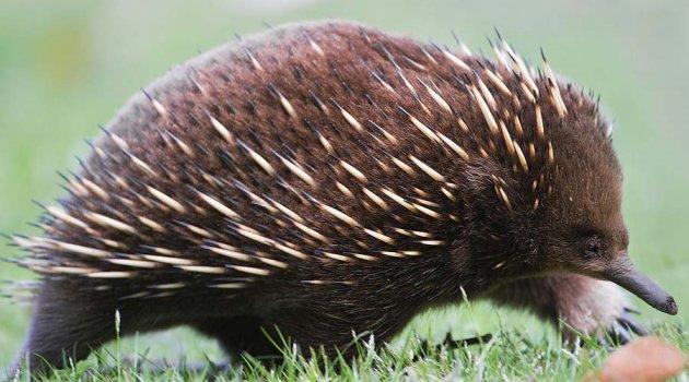 Снимки самых странных существ, населяющих нашу планету. Фото