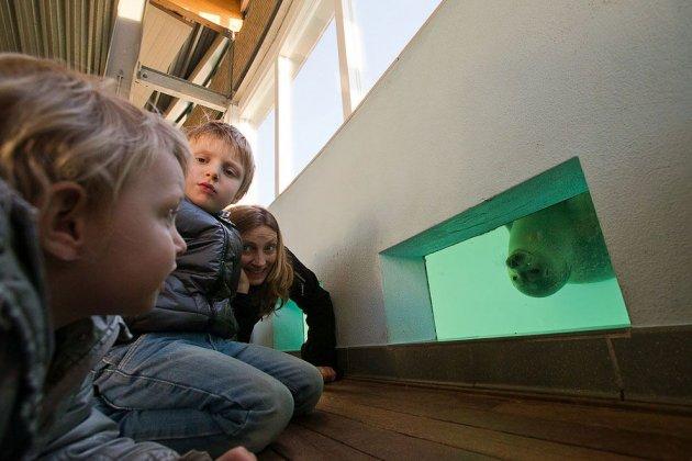 Світлини найбільшого в світі притулку для тюленей. Фото