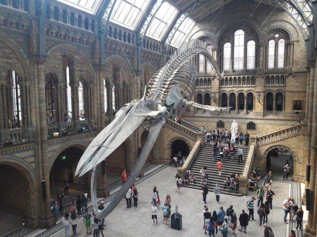Рідкісні музейні експонати, що існують в одиничному екземплярі. Фото
