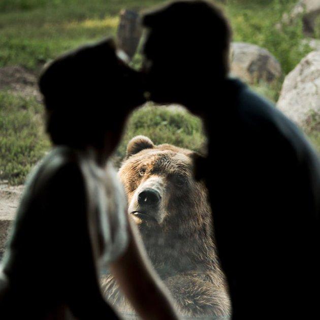 Реакція бурого ведмедя на весілля потішила Мережу. Фото