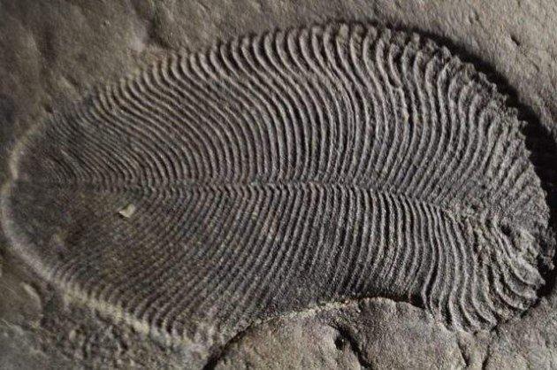 Знайдено останки самої стародавньої тварини на планеті