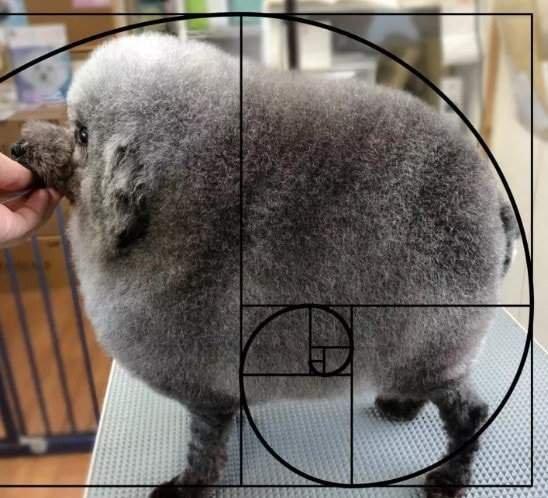«Круглий» пес з ідеальною стрижкою розвеселив мережу
