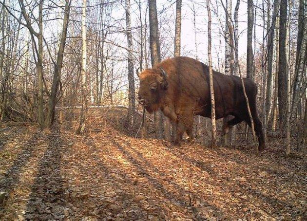 Тварини Чорнобиля в рідкісних знімках. Фото