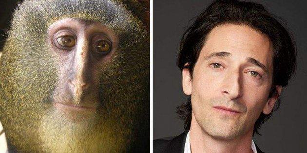 Фото-меми знаменитостей і їх двійників зі світу тварин