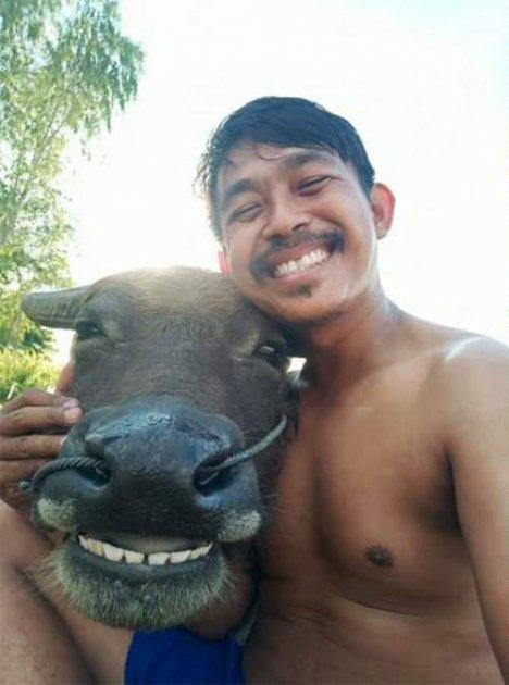 Усміхнений буйвол став новою зіркою Мережі