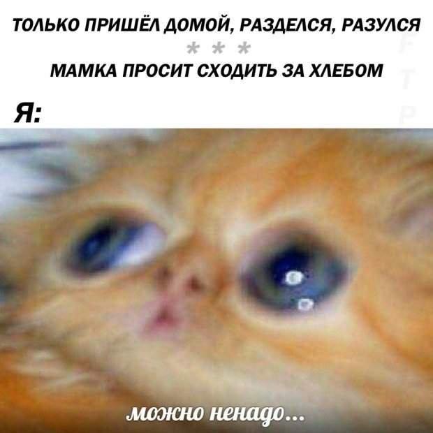 Руде кошеня стало героєм нового мема