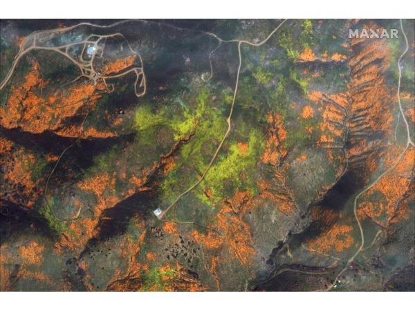Море маків: в Каліфорнії розцвіло безліч квітів. Фото