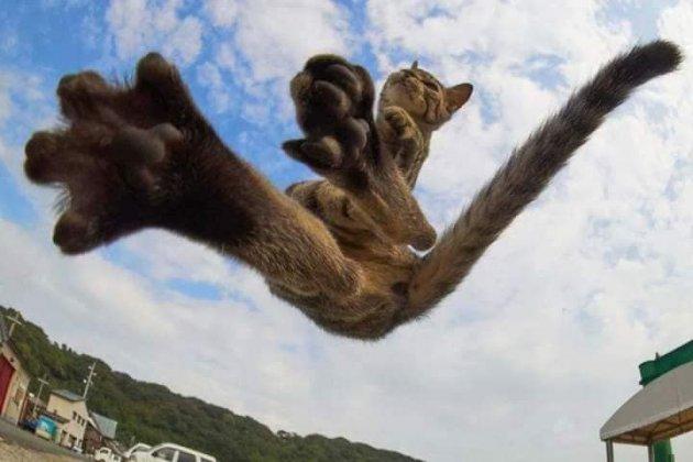Коти-ніндзя: японський фотограф створив неповторні світлини