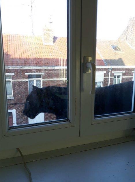 У французькому місті чорна пантера видерлася на дах