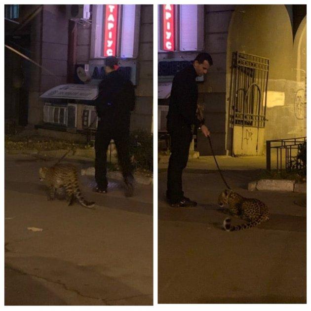 У центрі Києва бачили леопарда. Фото