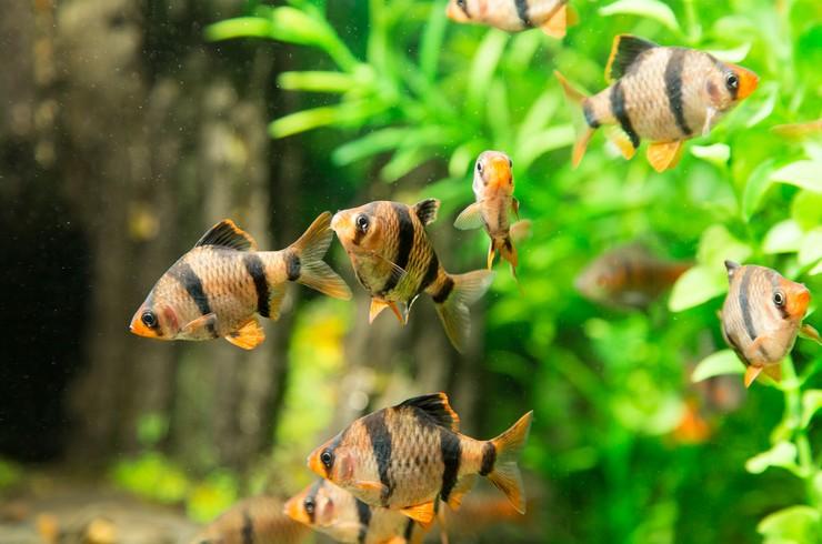Большой выбор качественных аквариумов по выгодным ценам