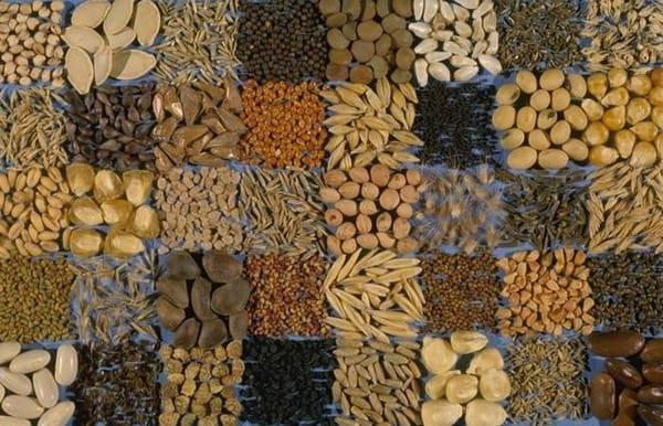 «Лидеа» – качественные семена французской селекции на Украине